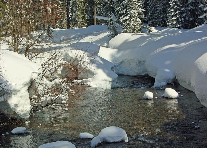 Creek Greeting Card featuring the photograph Odell Creek by Scott Gould