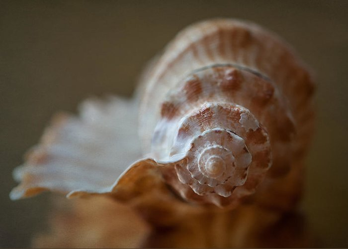 Shell Photographs Greeting Cards