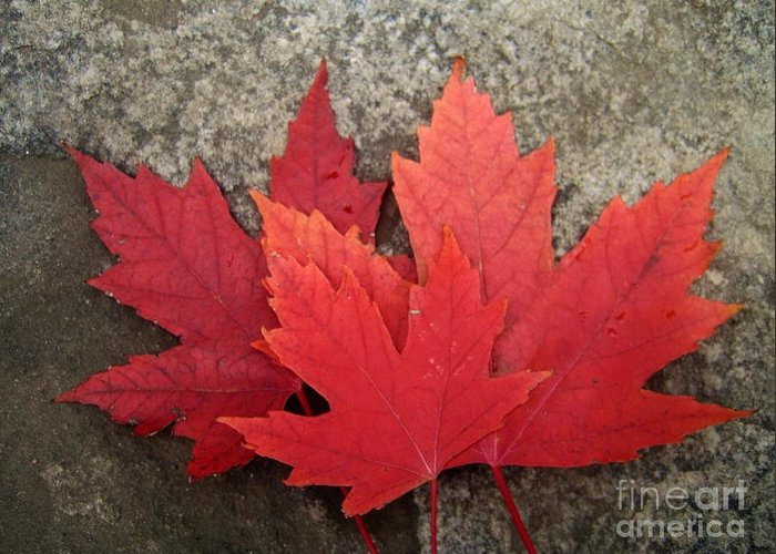 Canadian Symbols Greeting Card featuring the photograph Oh Canada by Reb Frost
