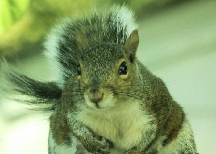 Squirrels Greeting Card featuring the photograph Ok Boss by Angelcia Wright