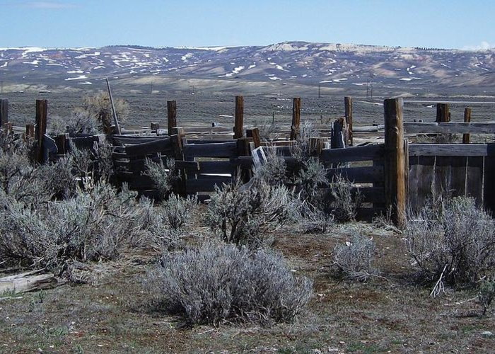 Landscape Greeting Card featuring the photograph Old Corral by Susan Pedrini