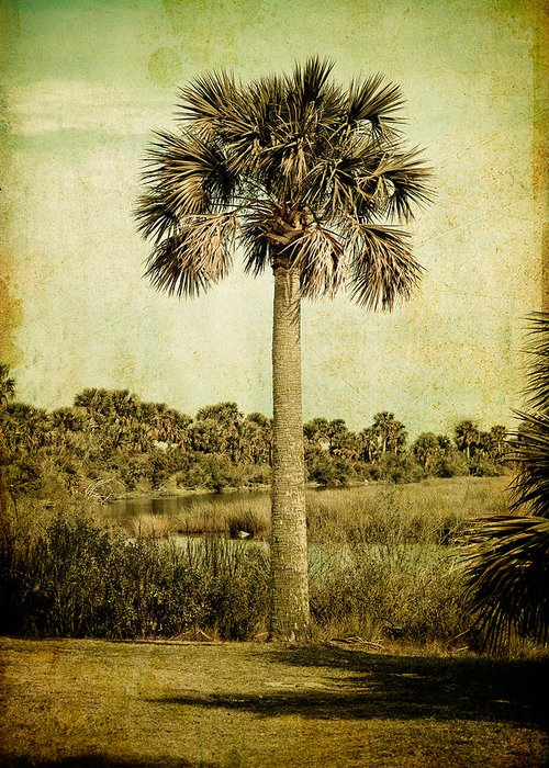 Palm Greeting Card featuring the photograph Old Florida Palm by Rich Leighton