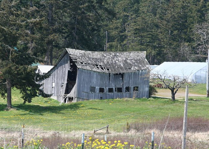 Photograph Greeting Card featuring the photograph Old Oak Harbor Barn Ba 9209 by Mary Gaines