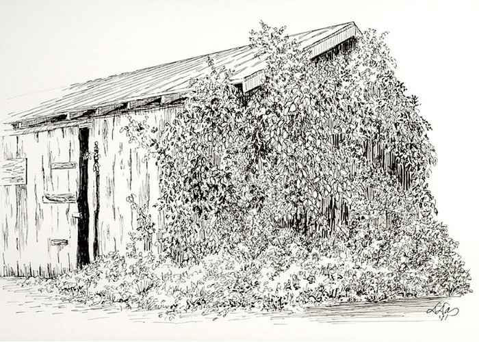 Nature Greeting Card featuring the drawing Old Shed by Deborah Dallinga