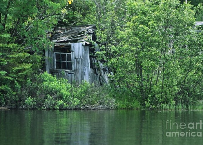 Shed Greeting Card featuring the photograph Old Shed On The Lake by Marjorie Imbeau