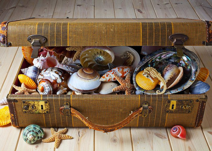 Suitcase Full Sea Shells Travel Greeting Card featuring the photograph Old Suitcase Full Of Sea Shells by Garry Gay