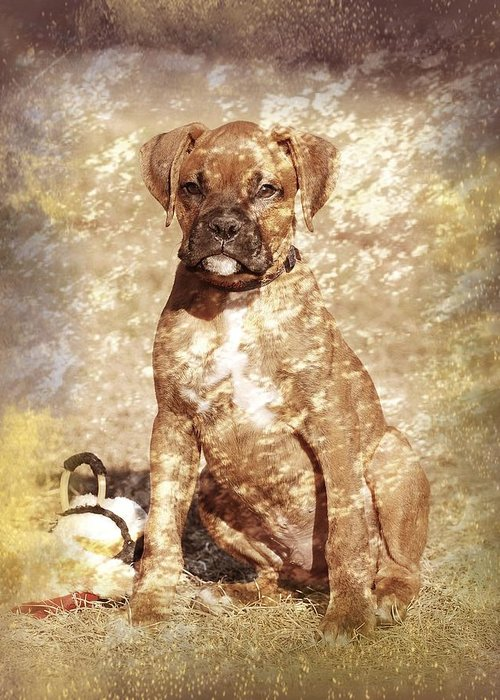 K9 Greeting Card featuring the photograph Old Time Boxer Portrait by Angie Tirado