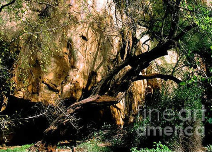 Trees Greeting Card featuring the photograph Old Tree by Kathy McClure