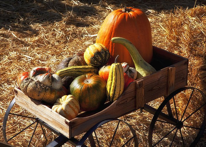 Gourd Greeting Card featuring the photograph Old Wagon Full Of Autumn Fruit by Garry Gay