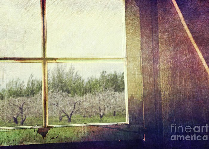 Antique Greeting Card featuring the photograph Old Window Looking Out To Apple Orchard by Sandra Cunningham