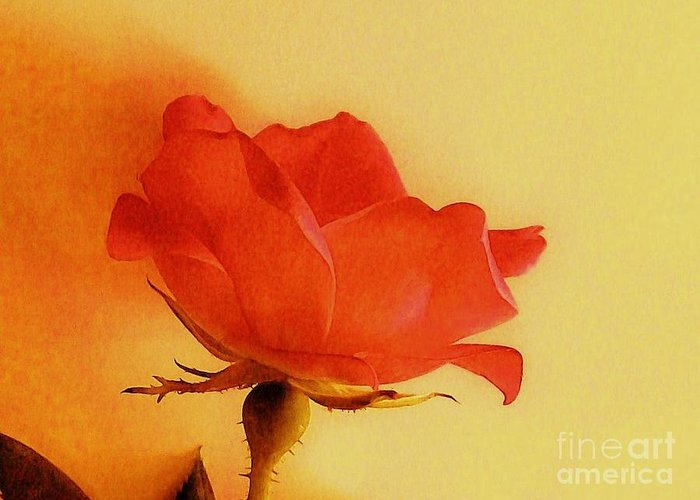 Photo Greeting Card featuring the photograph Old World Rose by Marsha Heiken