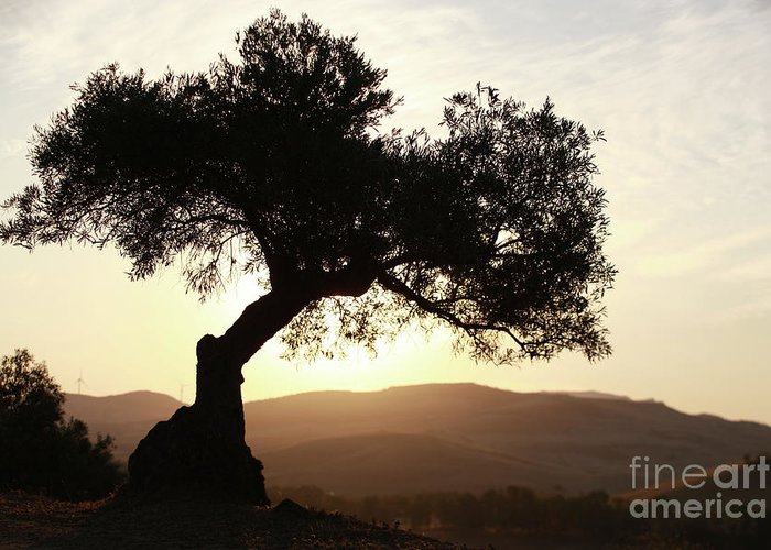 Olive Greeting Card featuring the photograph Olive At Sunset by Jana Behr