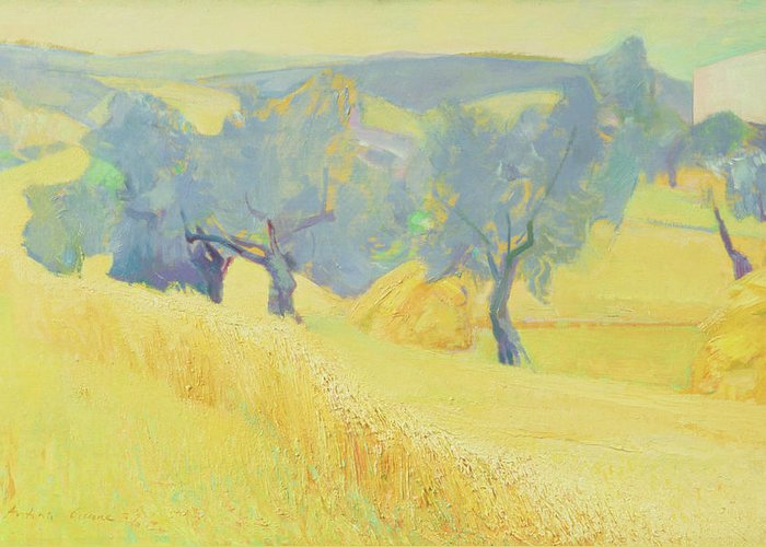 Tree; Tuscan; Landscape; Italian; Field Greeting Card featuring the painting Olive Trees In Tuscany by Antonio Ciccone