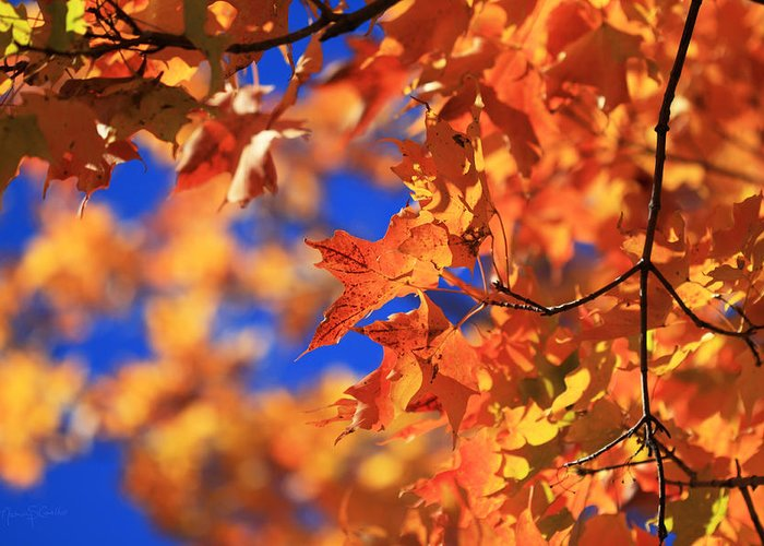 Autumn Greeting Card featuring the photograph On Fire by Nancy Coelho