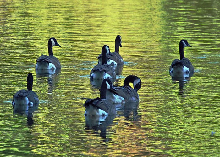 Geese Greeting Card featuring the digital art On Golden Pond by DigiArt Diaries by Vicky B Fuller