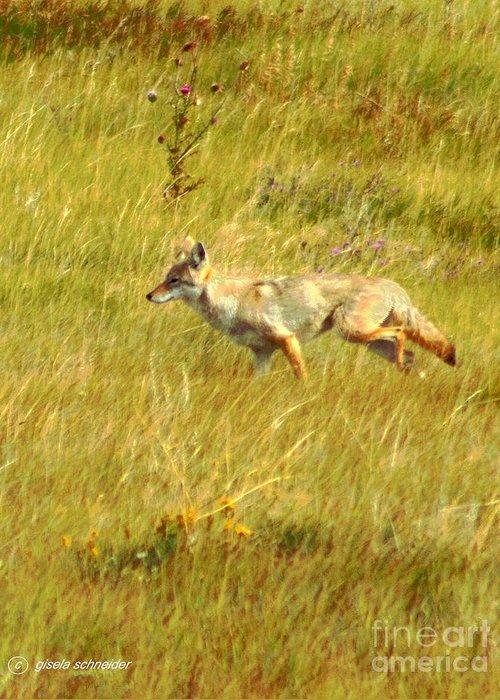 Art Greeting Card featuring the photograph On The Run ... Montana Art Photo by GiselaSchneider MontanaArtist