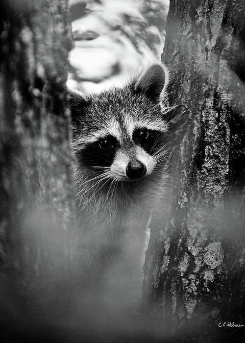Racoon Greeting Card featuring the photograph On Watch - Bw by Christopher Holmes