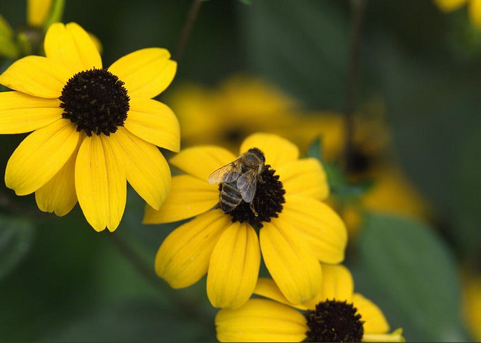 Yellow Greeting Card featuring the photograph One Bee Over The Flower's Nest by Adrian Bud