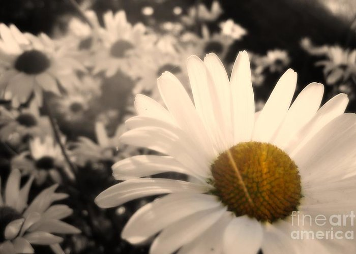 Daisy Greeting Card featuring the photograph One Daisy Stands Out From The Bunch by Ever-Curious Photography