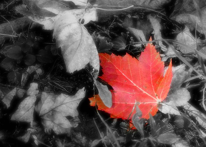 Leaf Greeting Card featuring the photograph One Of A Kind by Kenneth Krolikowski