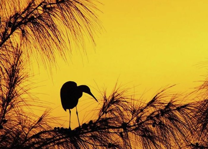 Egret Greeting Card featuring the photograph One Of A Series Taken At Mahoe Bay by John Edwards