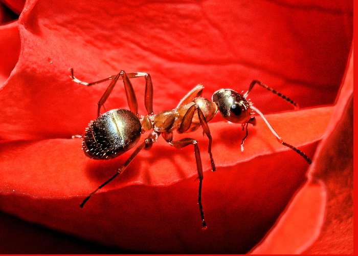 Ant Greeting Cards