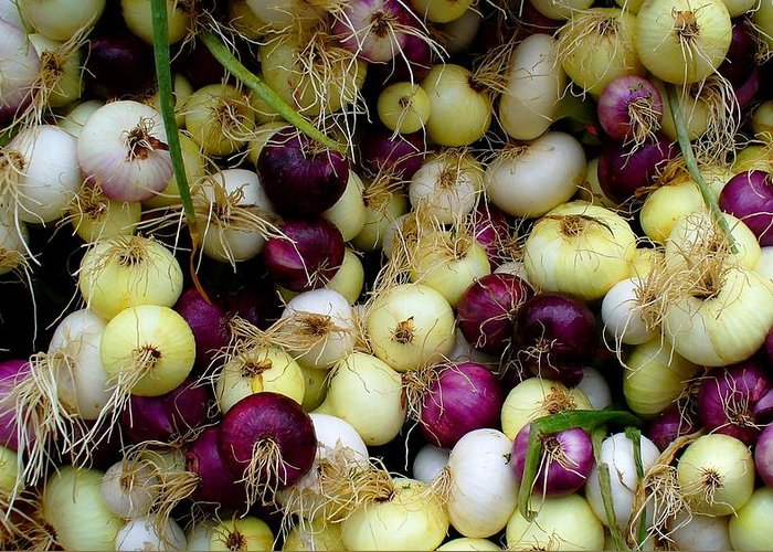 Produce Greeting Card featuring the photograph Onions Tri Color by Brenda Pressnall