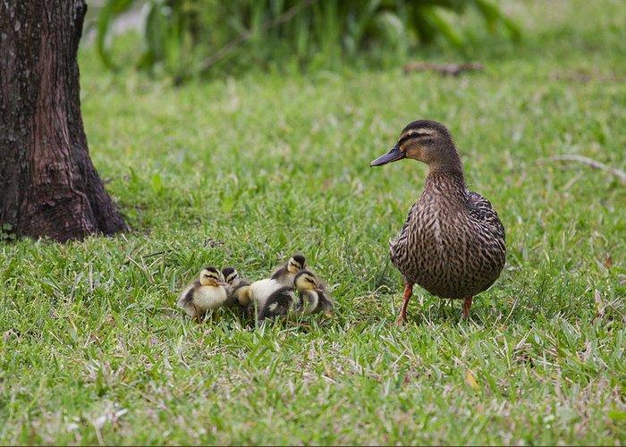 Duck Greeting Card featuring the photograph Onlooker by Mykel Davis