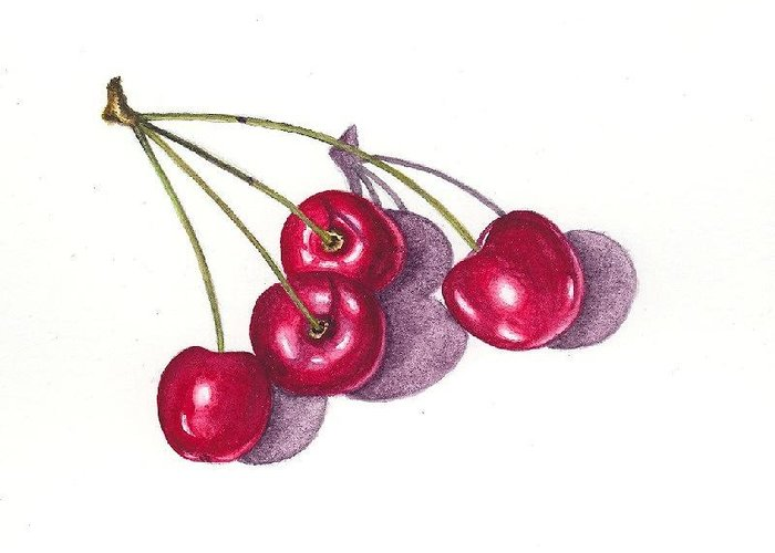 Cherries Greeting Card featuring the painting Ontario Cherries by Elizabeth H Tudor
