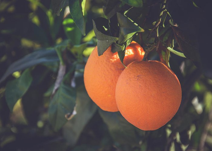 Nature Greeting Card featuring the photograph Orange #1 by Ignacio Leal Orozco