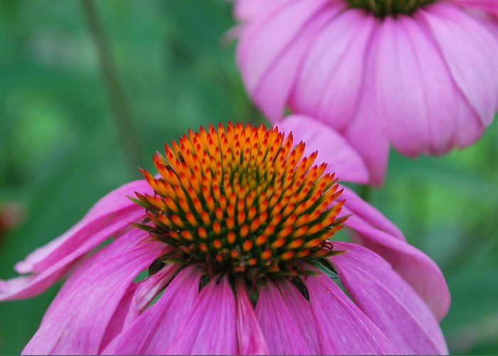 Flower Greeting Card featuring the photograph Orange And Purple by John Roncinske