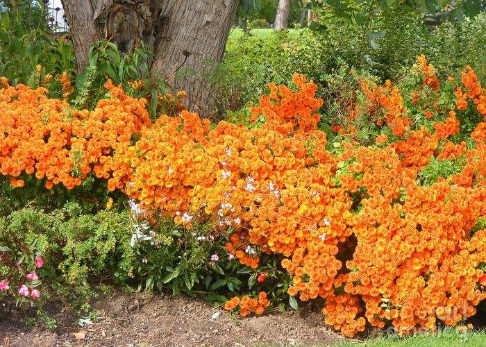 Flowers Greeting Card featuring the photograph Orange Beauty by Deborah Selib-Haig DMacq