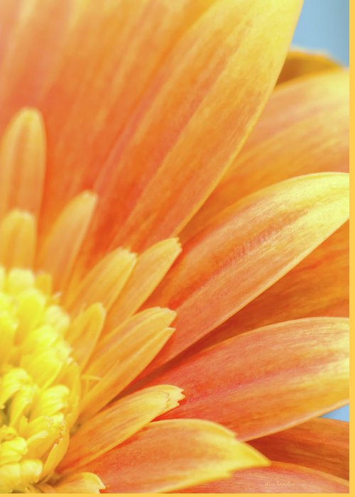 Gerbera Greeting Card featuring the photograph Orange Gerbera Petals by Wim Lanclus