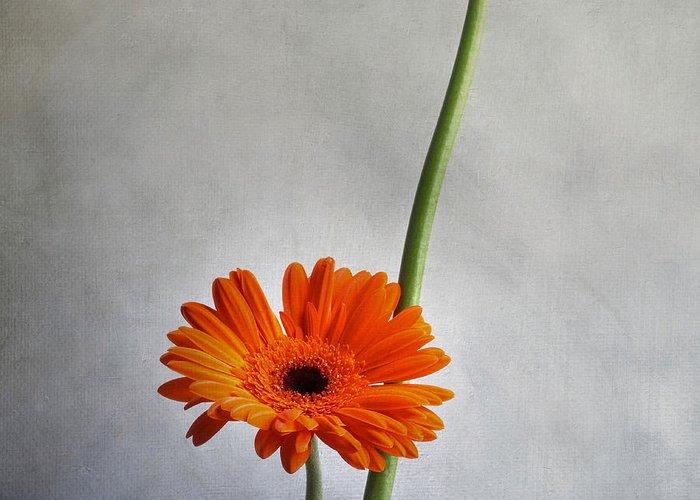 Texture Greeting Card featuring the photograph Orange Gernera by Bernard Jaubert