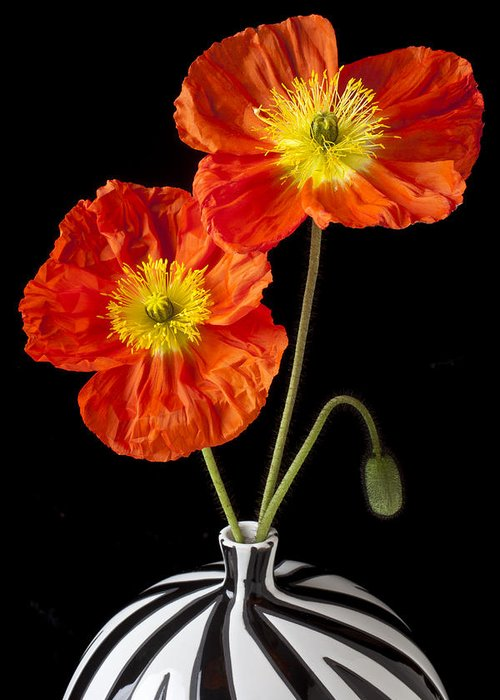 Orange Iceland Poppy Greeting Card featuring the photograph Orange Iceland Poppies by Garry Gay