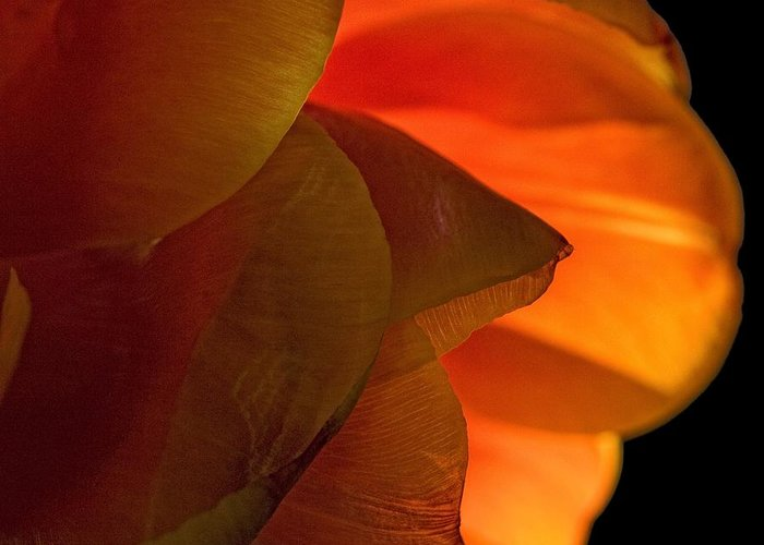 Flower Greeting Card featuring the photograph Orange Petals by Robert Ullmann