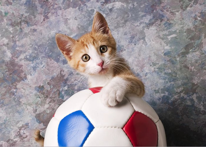 Kitten Greeting Card featuring the photograph Orange Tabby Kitten With Soccer Ball by Garry Gay