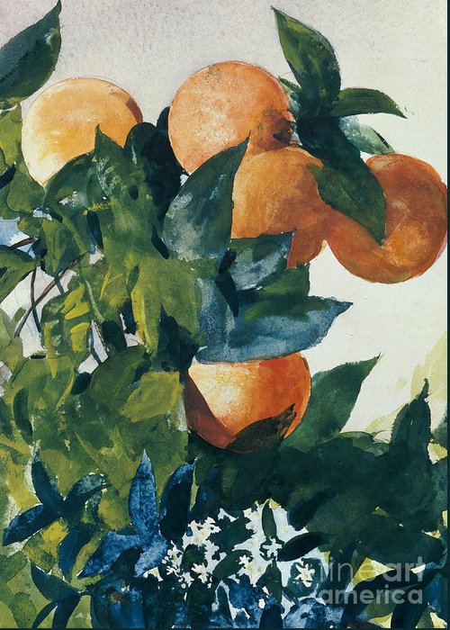 Oranges On A Branch Greeting Card featuring the painting Oranges On A Branch by Winslow Homer