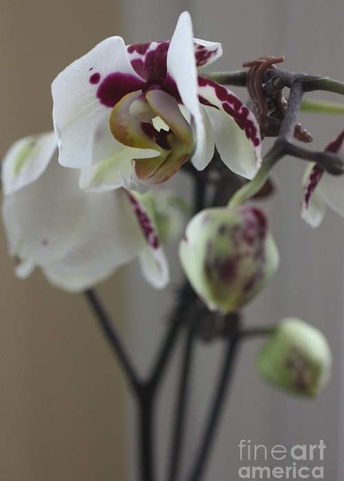 Orchid Greeting Card featuring the photograph Orchid - 100 by David Bearden