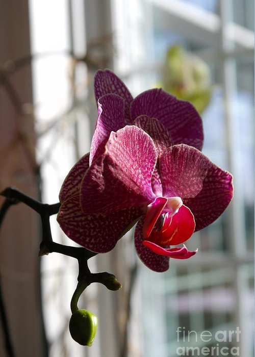 Orchid Greeting Card featuring the photograph Orchid - 102 by David Bearden