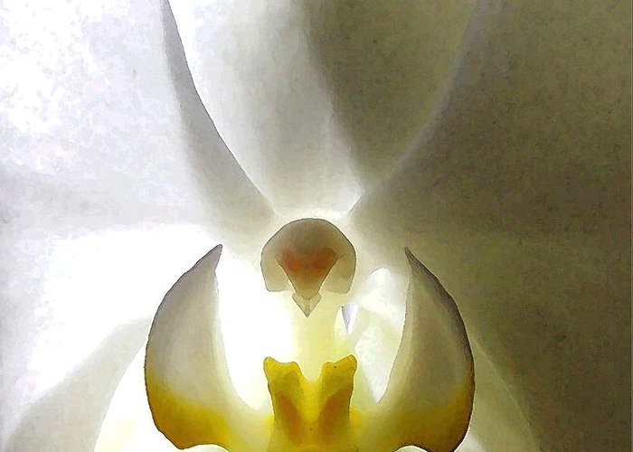Orchid Greeting Card featuring the photograph Orchid - The Wallflower by Dina Sierra