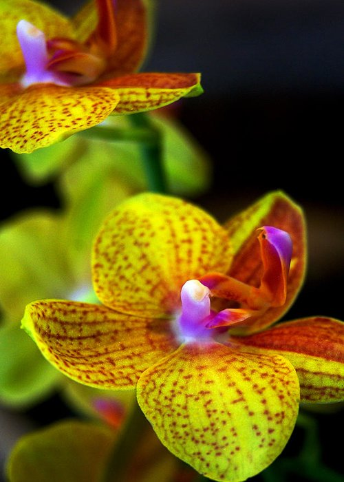 Orchid-0022 Greeting Card featuring the photograph Orchid-0022 by Sean Shaw