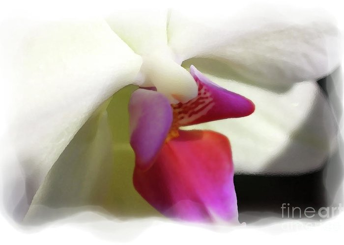 Orchid Greeting Card featuring the photograph Orchid 1 by David Bearden