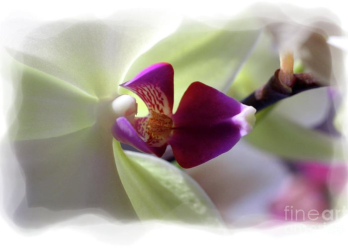 Orchid Greeting Card featuring the photograph Orchid 2 by David Bearden