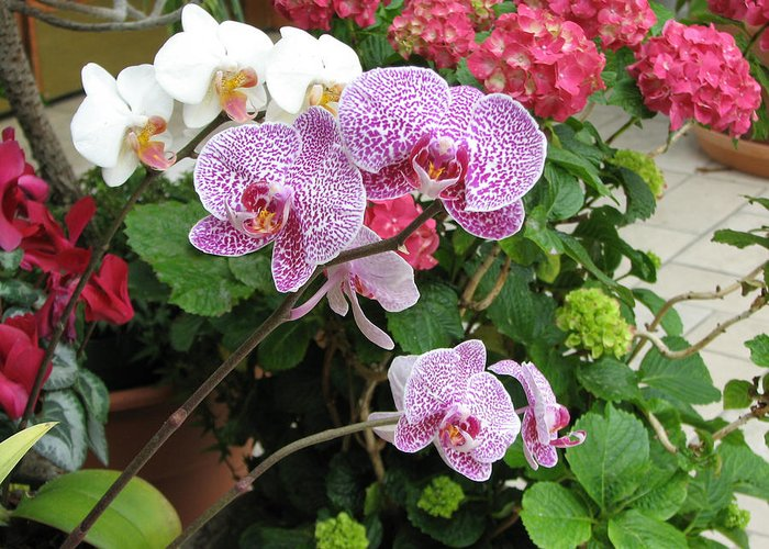 Orchid Greeting Card featuring the photograph Orchid 6 by David Dunham