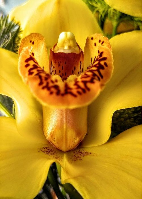 Orchid Greeting Card featuring the photograph Orchid by Agnieszka Adamska