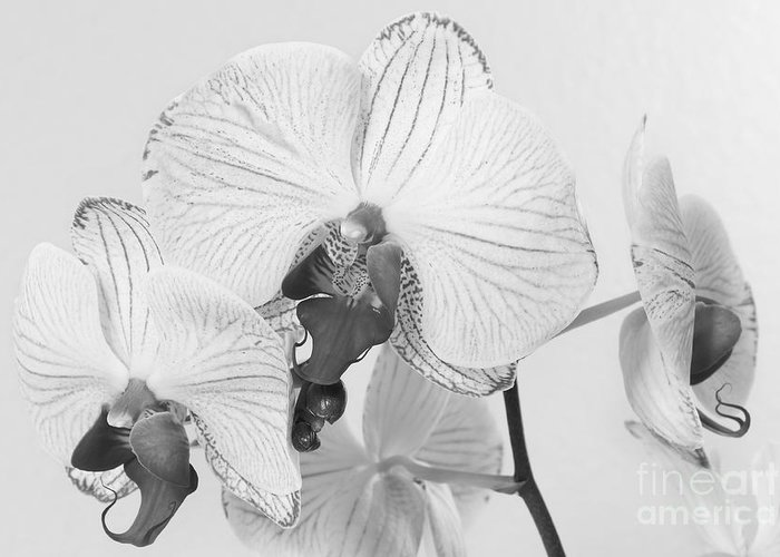 Flowers Greeting Card featuring the photograph Orchid Delight by Anita Oakley