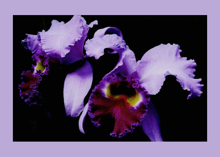 Purple Orchids Greeting Card featuring the photograph Orchid Elegance by Angela Davies