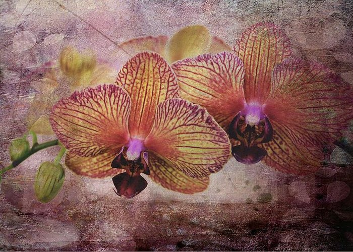 Orchids Greeting Card featuring the photograph Orchid Layers by Mattie Bryant