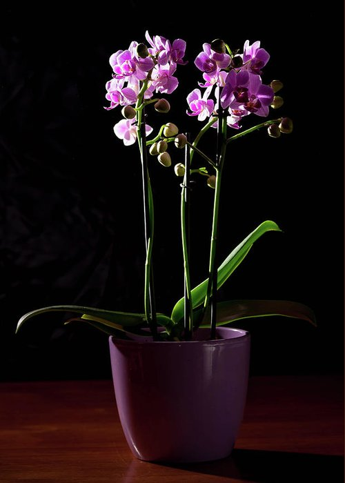 Orchid Greeting Card featuring the photograph Orchid by Stefan Rotter